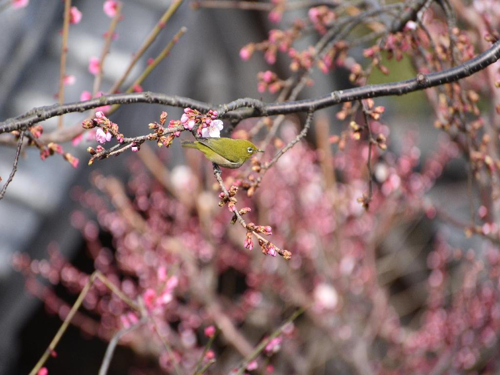 2015/03/4  境内山門前にて撮影